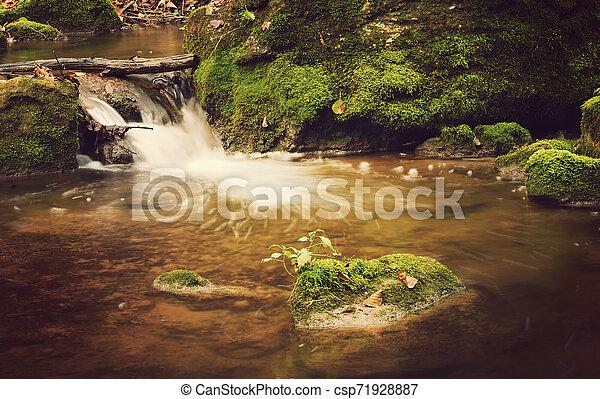 Autumn forest - csp71928887