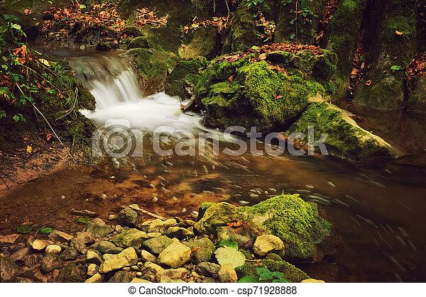 Autumn forest - csp71928888