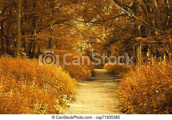 Autumn forest - csp71935385