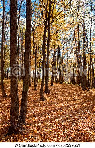 autumn forest scene - csp2599551