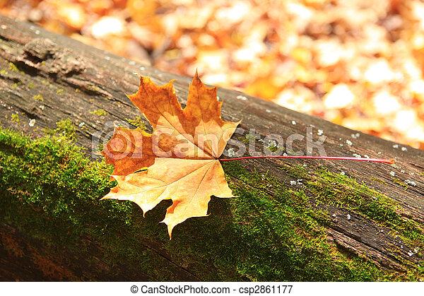 autumn forest scene - csp2861177