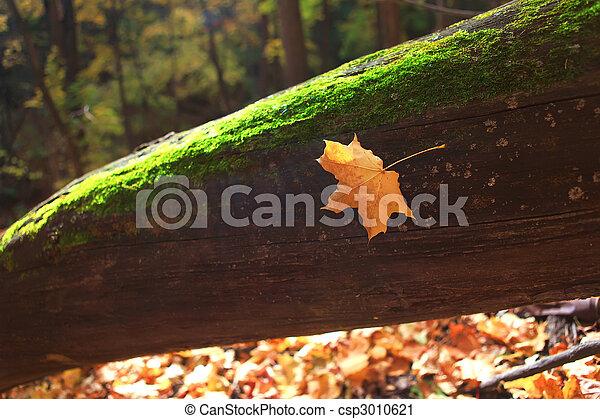 autumn forest scene - csp3010621