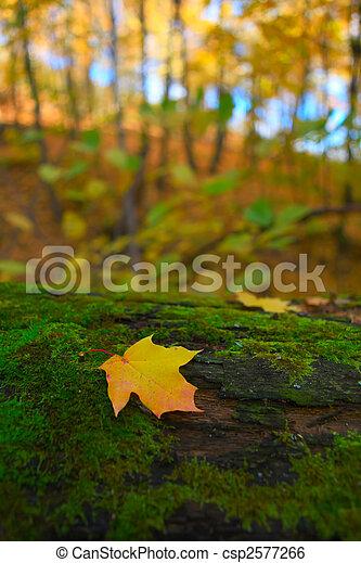 autumn forest scene - csp2577266