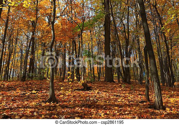 autumn forest scene - csp2861195