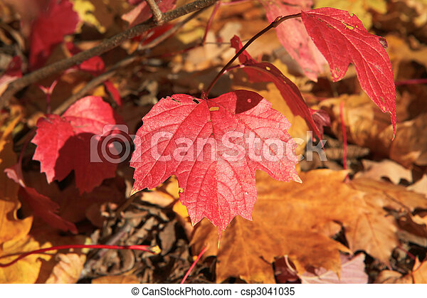 autumn forest scene - csp3041035
