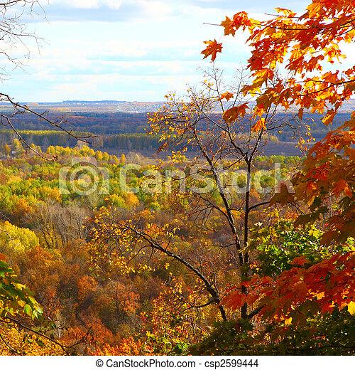 autumn forest scene - csp2599444