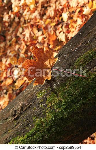 autumn forest scene - csp2599554