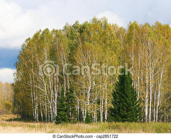 autumn forest scene - csp2851722