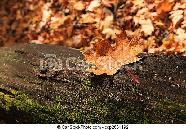 autumn forest scene - csp2861192