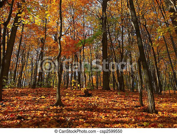 autumn forest scene - csp2599550