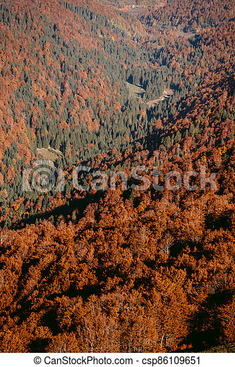 autumn forest scenery aerial view - csp86109651