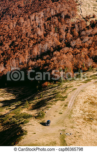 autumn forest scenery aerial view - csp86365798