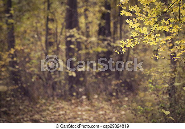 Autumn forest scenery - csp29324819