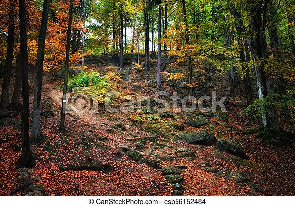 Autumn Forest Scenery - csp56152484