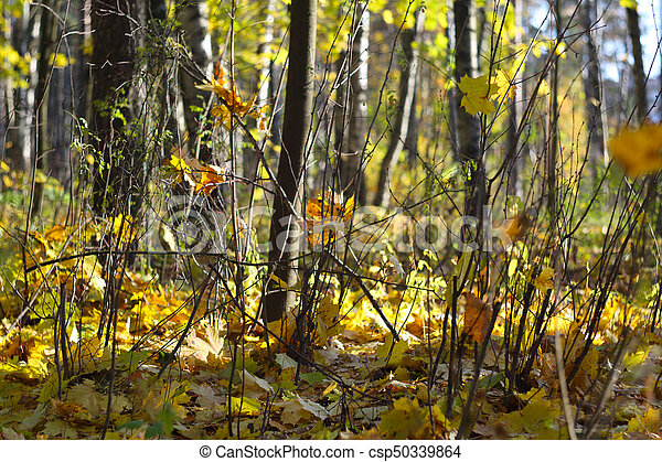 Autumn forest scenery - csp50339864