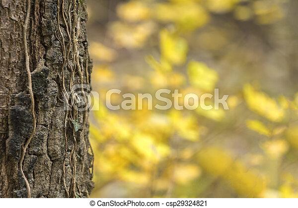 Autumn forest scenery - csp29324821