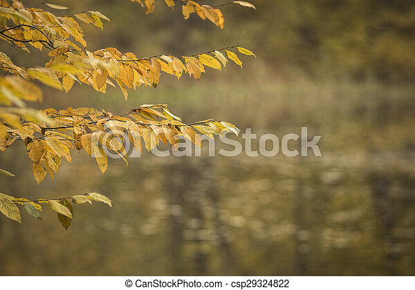 Autumn forest scenery - csp29324822