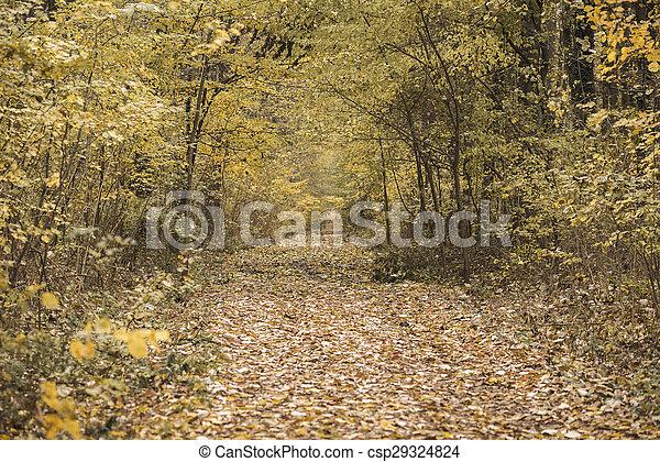 Autumn forest scenery - csp29324824