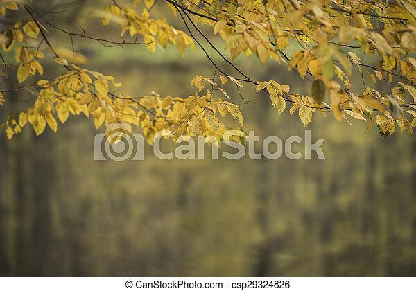 Autumn forest scenery - csp29324826