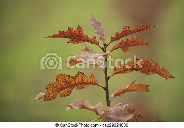 Autumn forest scenery - csp29324830