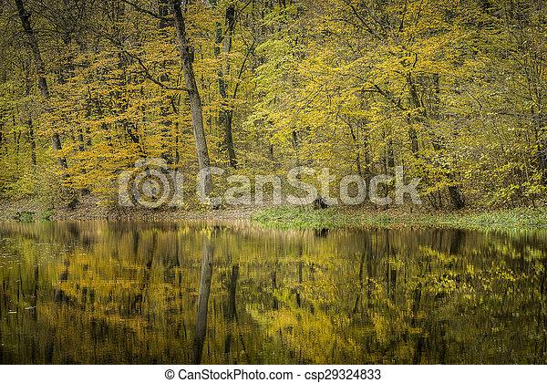 Autumn forest scenery - csp29324833