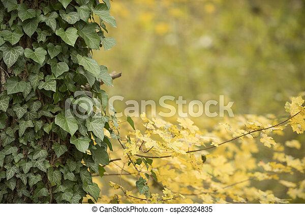 Autumn forest scenery - csp29324835