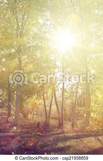 Autumn forest - csp21938859