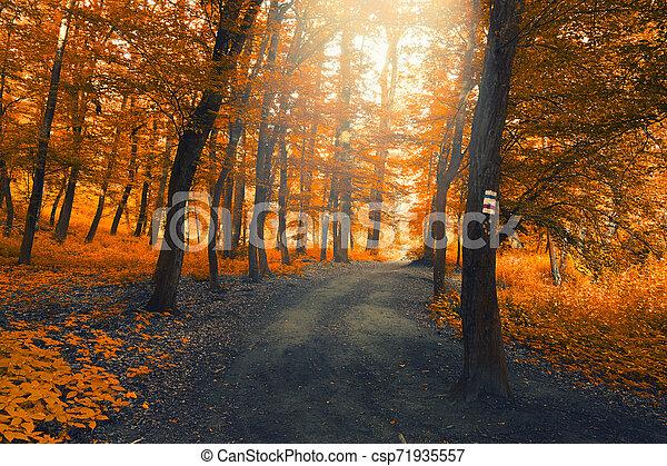 Autumn forest - csp71935557