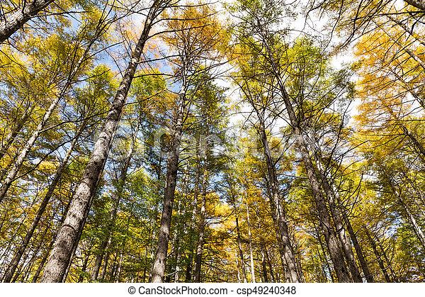 Autumn forest - csp49240348