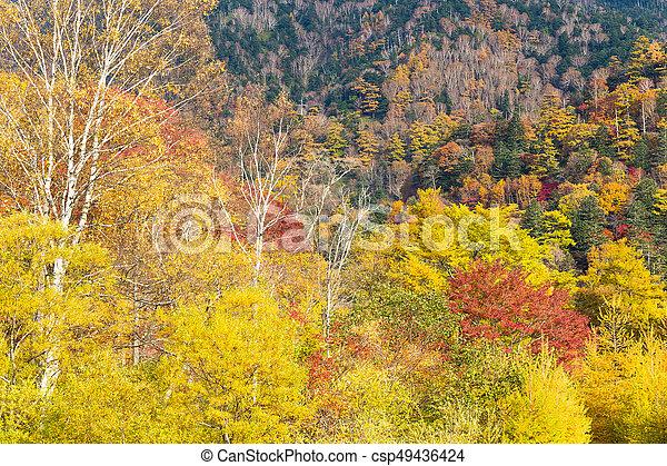 Autumn forest - csp49436424