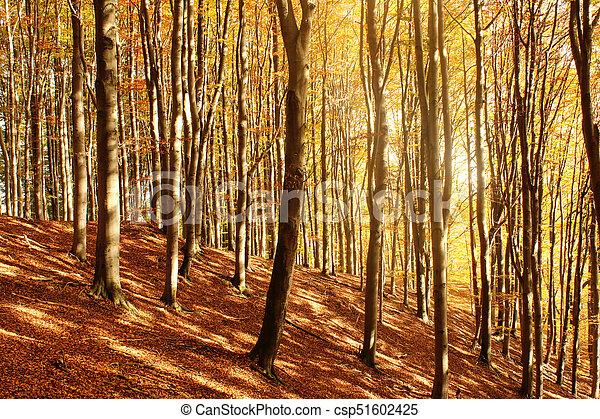 autumn forest - csp51602425