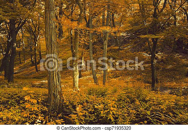 Autumn forest - csp71935320