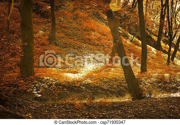 Autumn forest - csp71935347