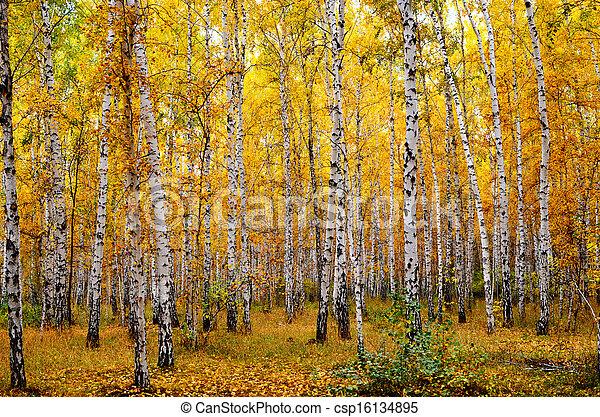 autumn forest - csp16134895