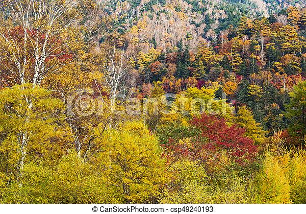 Autumn forest - csp49240193