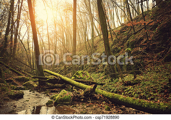Autumn forest - csp71928890