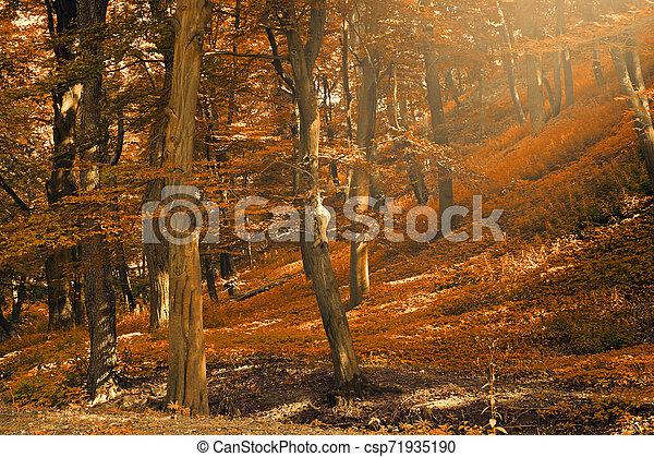 Autumn forest - csp71935190