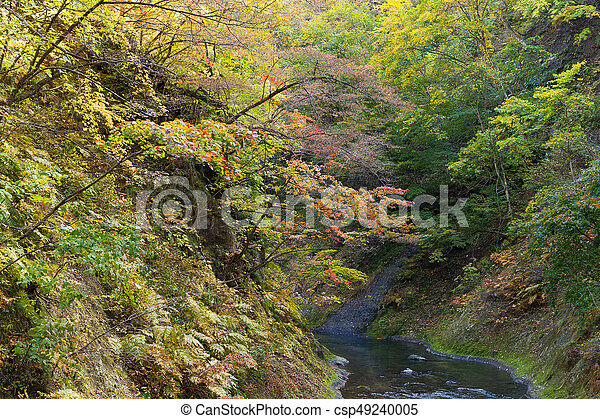 Autumn forest - csp49240005