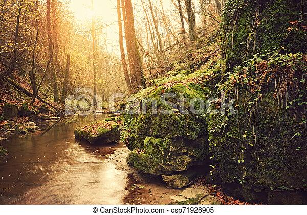 Autumn forest - csp71928905