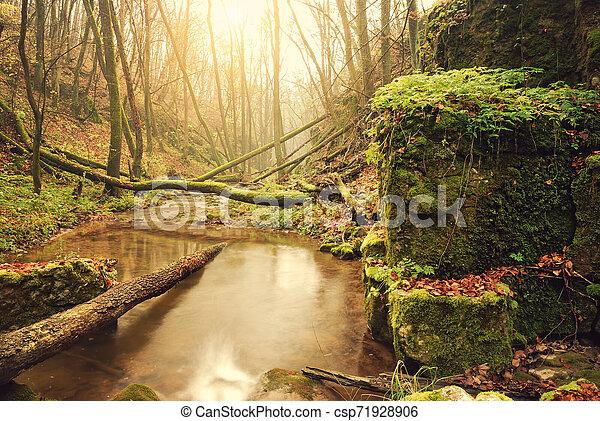 Autumn forest - csp71928906