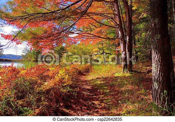 Autumn Forest - csp22642835