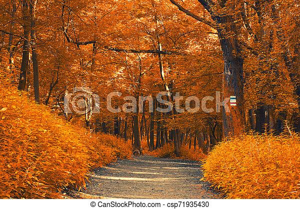 Autumn forest - csp71935430