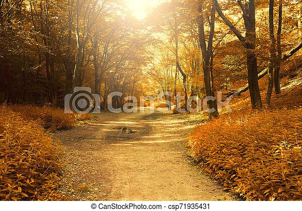 Autumn forest - csp71935431