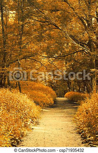 Autumn forest - csp71935432