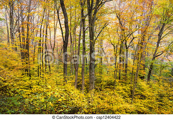 Autumn Forest Western NC Fall Foliage Trees Scenic Nature Photography with vibrant maple, oak, and ash - csp12404422