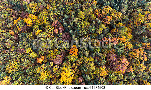 Autumn forest with green and yellow leaves, aerial drone view - csp51674503