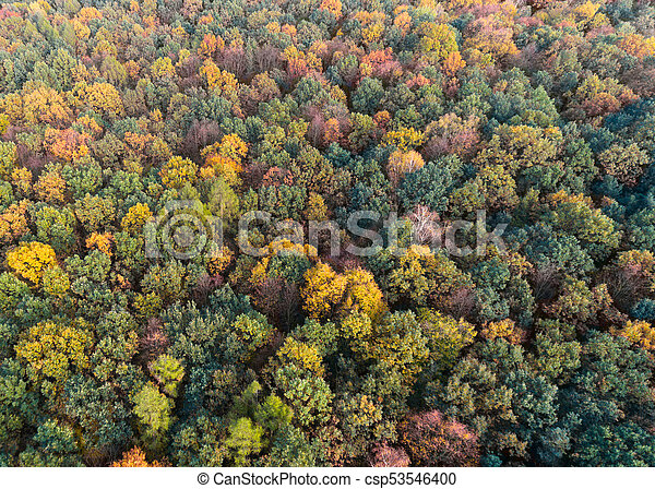 Autumn forest with green, red and yellow leaves, aerial drone view - csp53546400