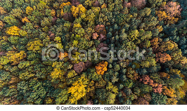 Autumn forest with green, red and yellow leaves, aerial drone view - csp52440034