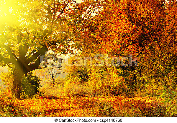 autumn forest with sun beam - csp4148760