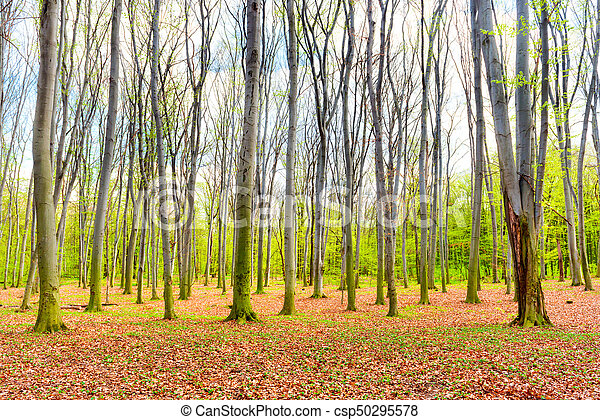 Autumn forest with yellow leaves - csp50295578